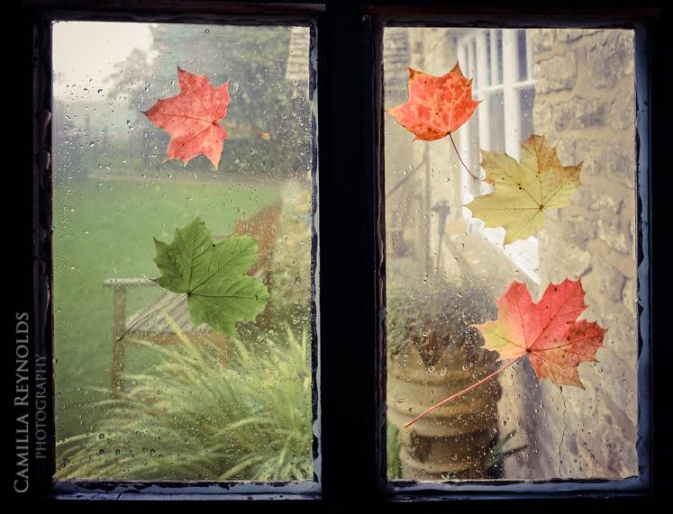 leaves 3 wweb