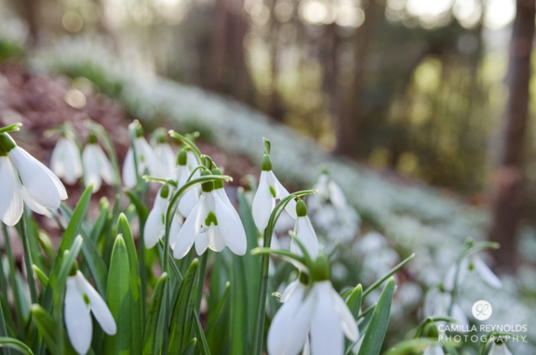 photo shoot snowdrops Cotswolds Gloucestershire