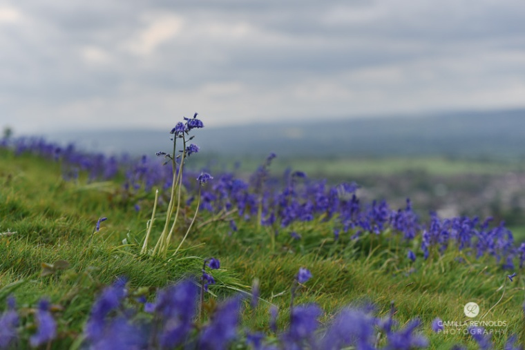 bluebells photography Gloucestershire Cotswolds