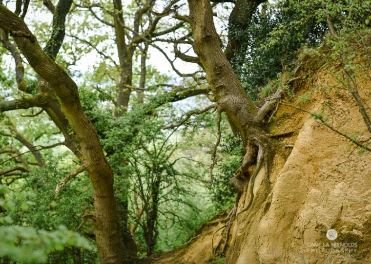 amazing nature photography Gloucestershire Cotswolds
