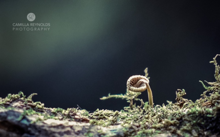 fungi-2