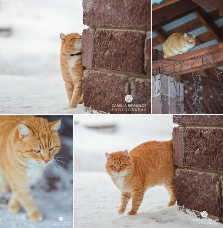 ginger_cat_snow_photography (10)