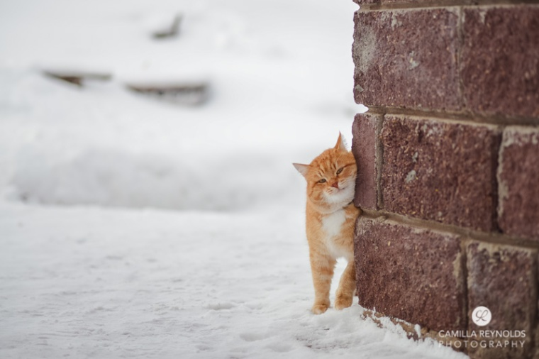 ginger_cat_snow_photography (11)