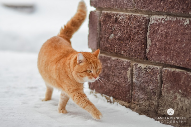ginger_cat_snow_photography (12)