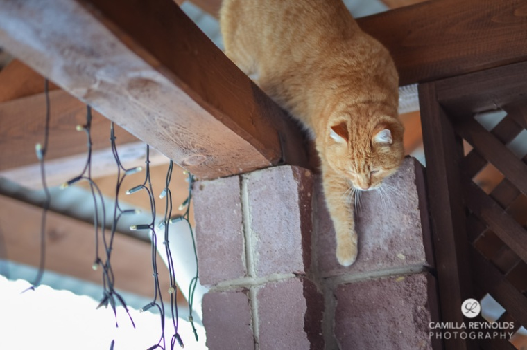 ginger_cat_snow_photography (13)