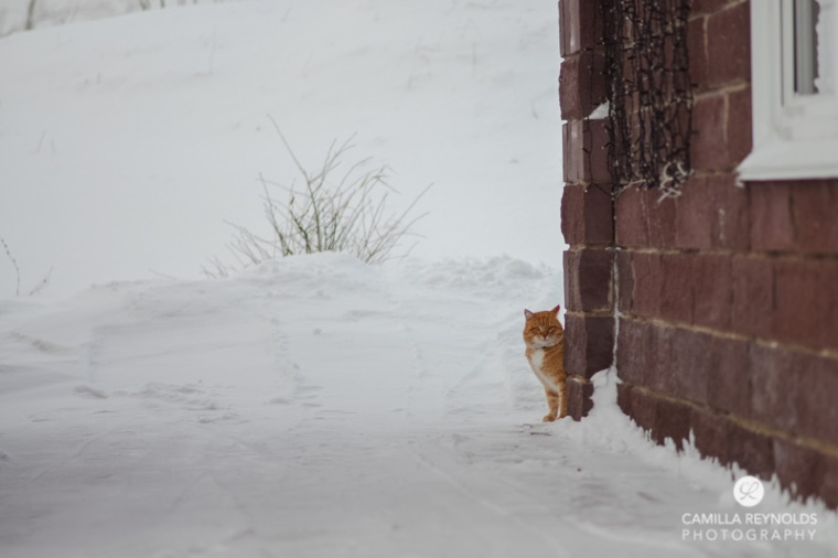 ginger_cat_snow_photography (14)