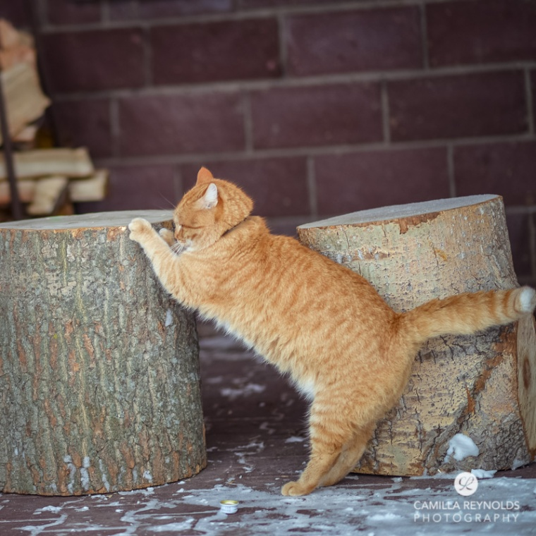 ginger_cat_snow_photography (15)