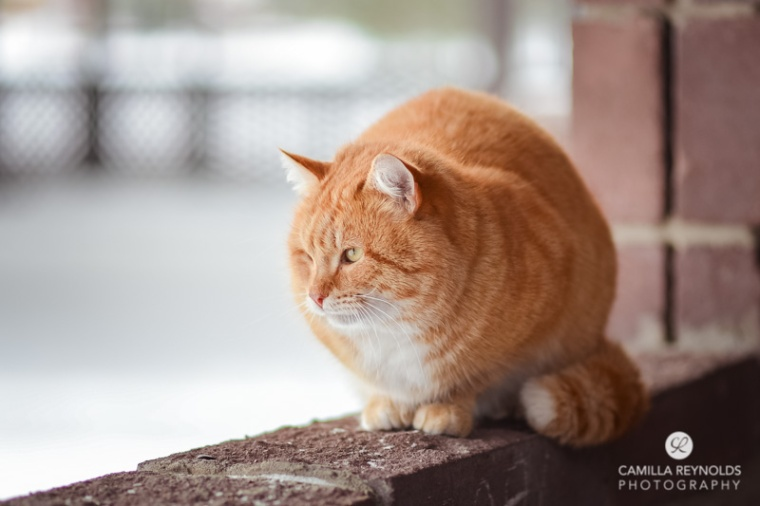 ginger_cat_snow_photography (16)