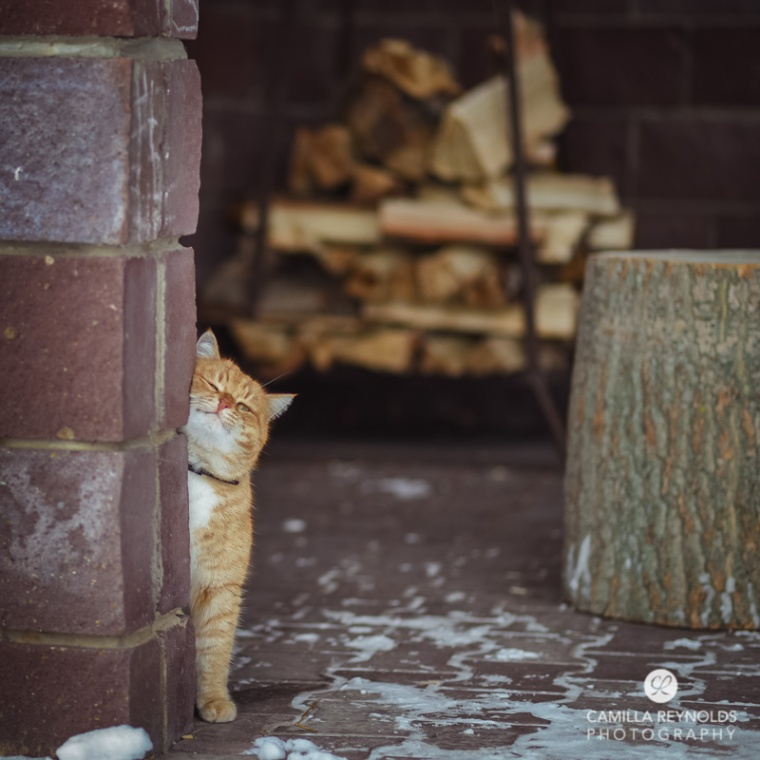cute ginger cat photography