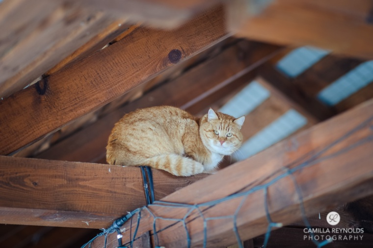 cute ginger cat roof