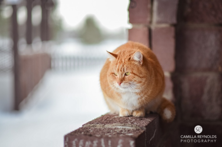 ginger_cat_snow_photography (7)
