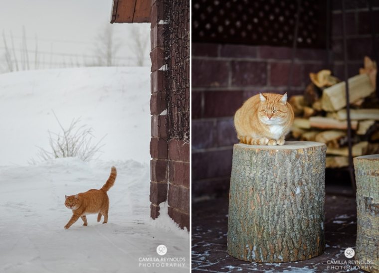 ginger_cat_snow_photography (8)
