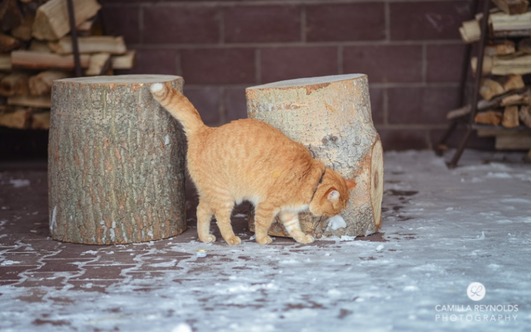 ginger_cat_snow_photography (9)