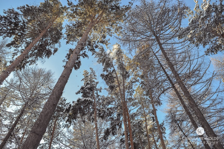 winter nature photography (10)