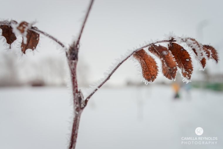 winter nature photography (12)
