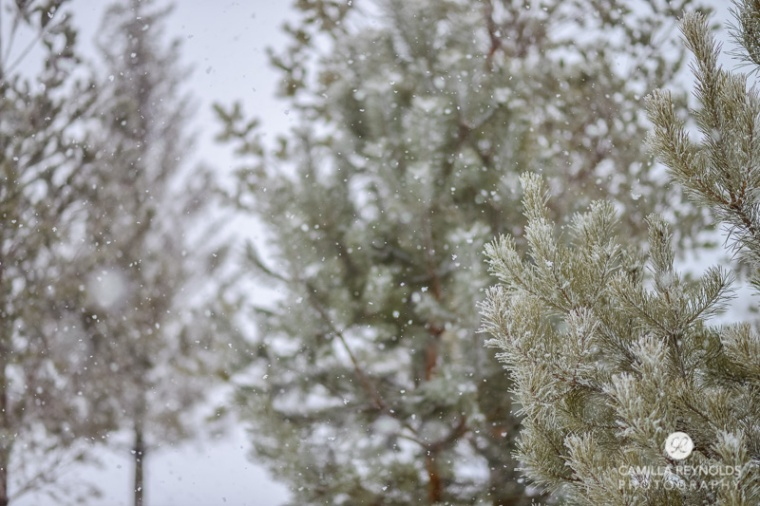 winter nature photography (4)