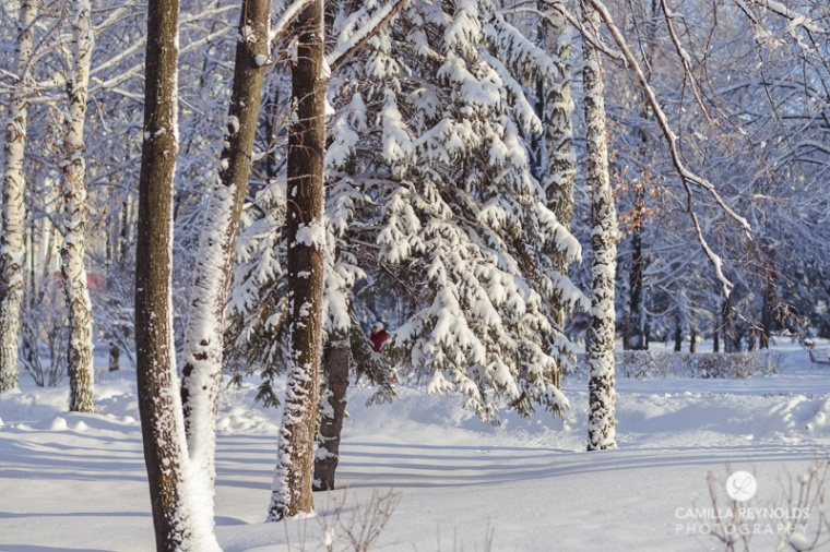 winter nature photography (5)