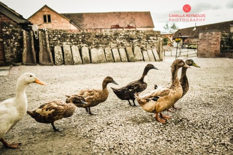 cotswold wedding photographer milton end farm barn (50)