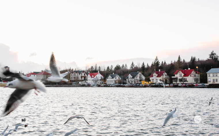 iceland camilla reynolds photography (30)