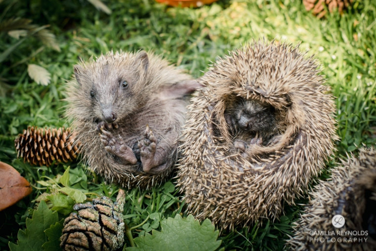 hoglet photography stroud