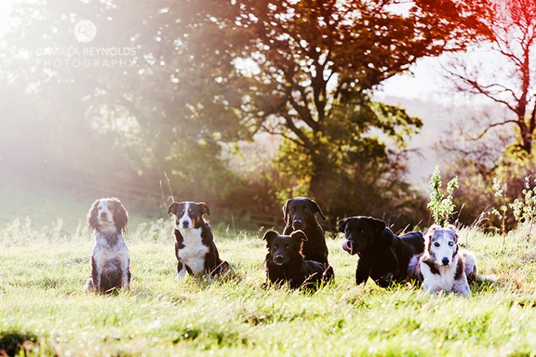 dog photo shoot Cotwolds