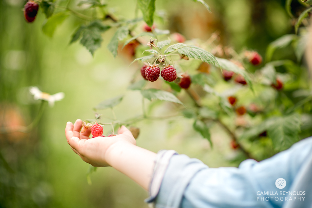 child hand holding raspberries cotswold family photography