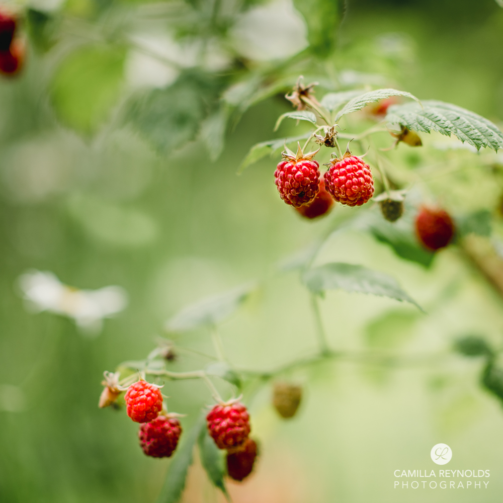 raspberries cotswold photographer